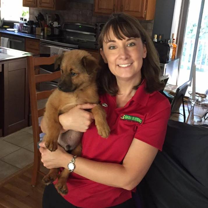 Home Dog Training Westchester profile